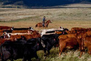 Sangres Best Grass Fed Beef - Westcliffe, Colorado